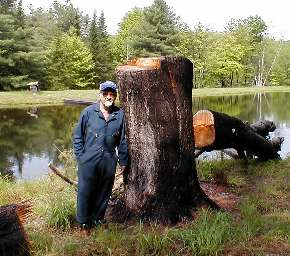 Dad and a big stump